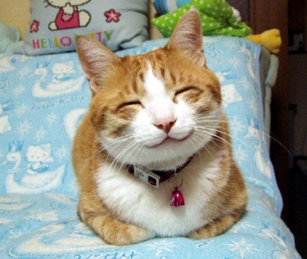 When providing customer support, imagine yourself as a happy cat, with a HUGE smile.