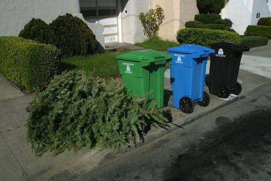 Tree In Garbage.jpg